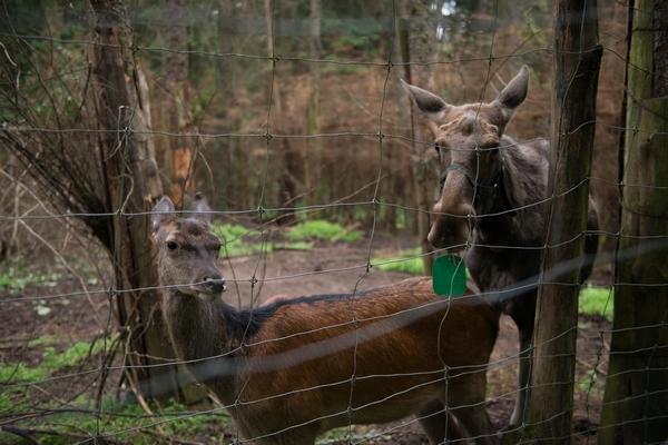 Park dzikich zwierząt w Kadzidłowi