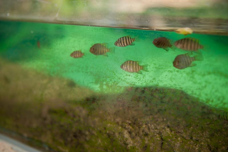 rybki zoo