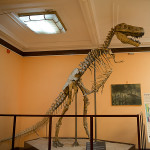 Muzeum ewolucji