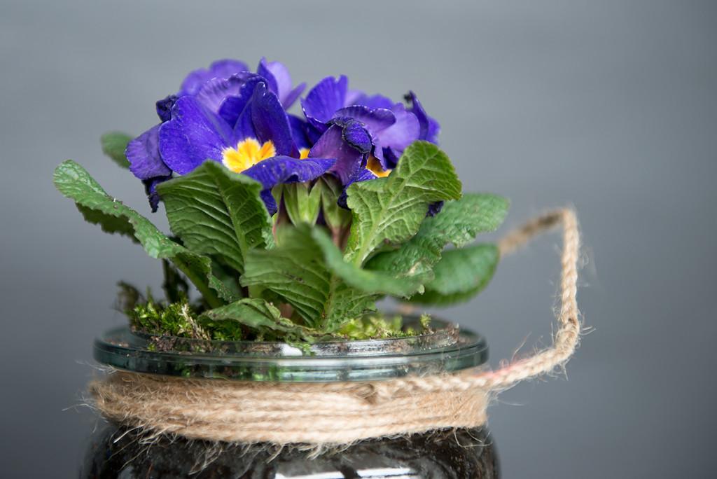 kwiaty w słoiczku